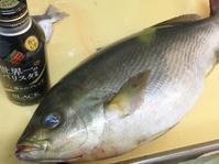 2017 八幡浜のイサキと白河甘鯛。 - 根津松本 番長 鈴木勇治による 魚の美学