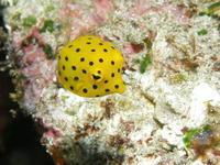 2011.09 奄美 The 2nd day The 2nd Dive - ランゲルハンス島の海