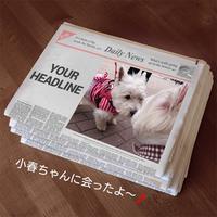 ♪ダニエル 今年最後のいちご狩りへ~(*^_^*) ♪ - happy west DANIEL story