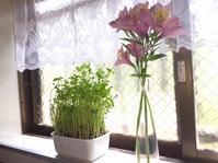 花と緑のある暮らし - 編み好き@amiami通信