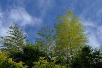 風は爽やか - 何となく晴!blog2