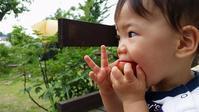トマトを - 成長する家 子育て物語