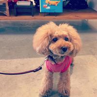 Hello Viola! - Doggie Do!! / good dog and hello cat !!