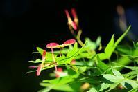 紅葉も緑葉も魅力的 - 丹馬のきょうの1枚