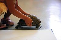 リクガメを写生しよう - 絵画教室アトリエTODAY