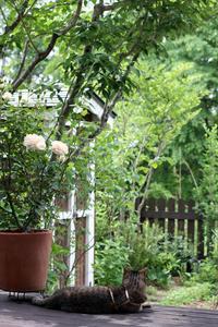夏日の昨日 - 小さな森のキキとサラ