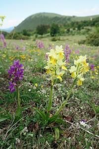 歯割れ牛追いセーターなくした五月山、イタリア - イタリア写真草子 Fotoblog da Perugia