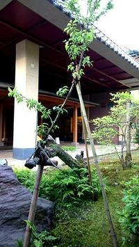 梅と支柱 - 金沢犀川温泉 川端の湯宿「滝亭」BLOG