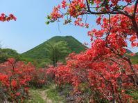 榛名山のヤマツツジを見に出かけてきました♪(5/29) - 井ノ中カワズの井戸端ばなし