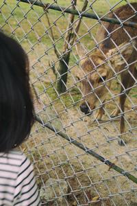奈良公園 - photoな日々