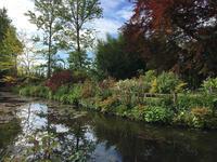 【パリ便りvol.1】ジヴェルニー、モネの庭の初夏 - モネの庭だより