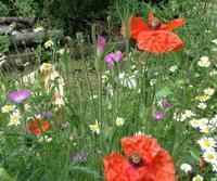 花を見つけ 家で過ごす - 島暮らしのケセラセラ