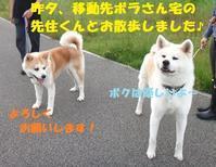 春菜ちゃん、里親さまの募集をいったん停止いたします (__) - もももの部屋(家族を待っている保護犬たちと我家の愛犬のブログです)