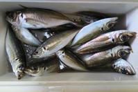 自然の恵み〜魚・果実・野菜 - 光さんの日常