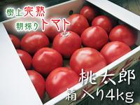 樹上完熟の朝採りトマト令和元年の予約販売受付スタート!初回出荷は6月11日(火)です! - FLCパートナーズストア