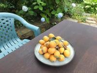 好きな果物は田舎の味 - アオモジノキモチ