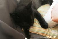 眠くてたまらないジジ - 猫と自然と散歩の日々