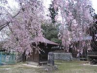 撮り溜めた写真から~弁天堂と桜(笹谷熊野神社境内) - 風の人:シンの独り言(大人の総合学習的な生活の試み)