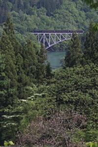 藤色の鉄橋と桐の花- 2017年春・只見線 - - ねこの撮った汽車