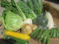 今週の野菜セット5月5週目6月1週目 - まるみど農園のあれこれ日記
