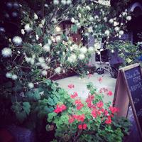 *本日6/3は〜 - salon de thé okashinaohana 可笑的花