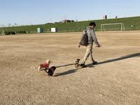 17年6月3日グランドでサッカー♪ - 旅行犬 さくら 桃子 あんず 日記