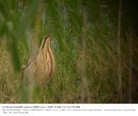 印旛沼北部調整池 2017.5.28(1) - 鳥撮り遊び