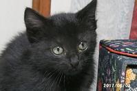 ジジの里子にいくトライアルが決まりました - 猫と自然と散歩の日々