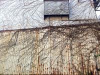 the rOle blOod vesSele - SUKIMA COLLECTION ー無作為の美ー   Art of non artificiality