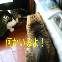 にゃんこ劇場「何かいるよ!」 - ゆきなそう  猫とガーデニングの日記