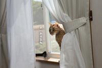 窓際でひなたぼっこ - にゃんず日記