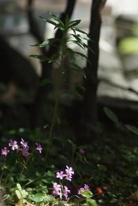 草花陰陽 - 日本写真かるた協会~写真が好きなオッサンのブログ~