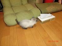 我が家の新入り猫 - 香りの部屋