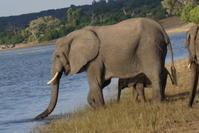 チョベな日々 ② - 象を読む人 象を書く人