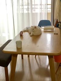 本日もお疲れ様です。 - shimaai   藍染屋の独り言。