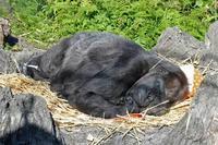お昼寝ピーコさんとハオコ&モモカ - 続々・動物園ありマス。