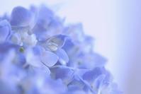 紫陽花に恋して - 赤煉瓦洋館の雅茶子