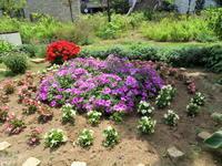 花壇の刈り込み梅雨に備えて - ニッキーののんびり気まま暮らし