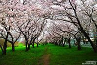 春のいぶき - GOOD LUCK!
