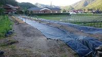 ブルーベリー畑へ防草シートを敷く - 初めてのブルーベリー栽培記