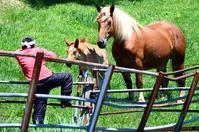 馬の放牧岩手県軽米町 - あちゃこちゃばやばや 2