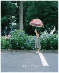 Film Hydrangea* - ココロハレ*