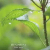 *梅雨入り* - HANA*HANA