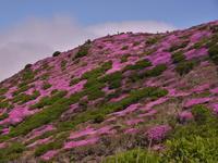 今年もイイミヤマ詣でが出来ました - 休日登山日記