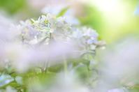 夢色紫陽花 - 今日の小さなシアワセ