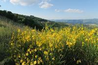 エニシダきらきら初夏の山、ペルージャ テッツィオ山 - イタリア写真草子 Fotoblog da Perugia