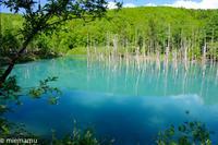 青い池にて~6月の美瑛 - My favorite ~Diary 3~