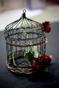 紅い花 - Yoshi-A の写真の楽しみ