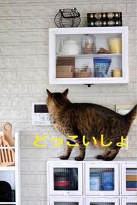 にゃんこ劇場「耐重性あり!」 - ゆきなそう  猫とガーデニングの日記