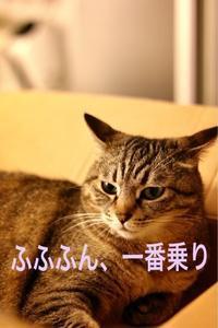 にゃんこ劇場「ダンボール争奪戦!」 - ゆきなそう  猫とガーデニングの日記